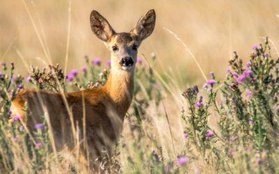 Bambi muss nicht sterben!